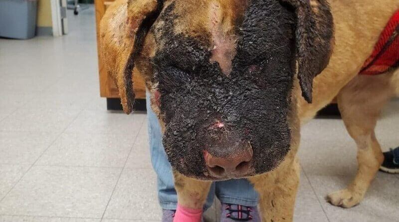 No charges to be filed against person who set dog on fire